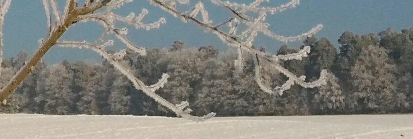 Eiskristalle am Baum